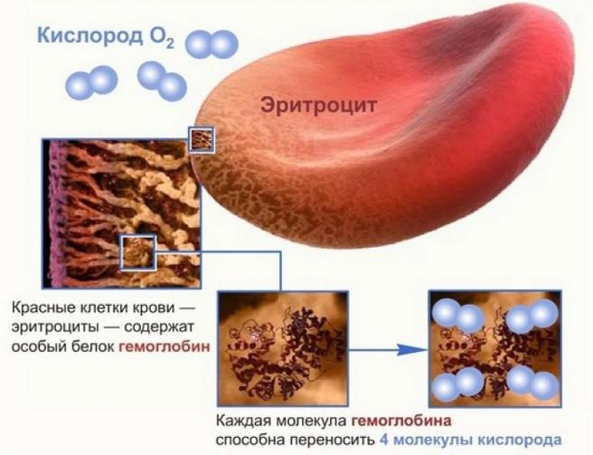 Если у беременных понижен гемоглобин что это значит